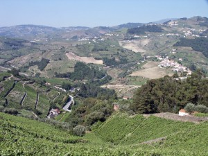View over some vineyards in the Duero Valley