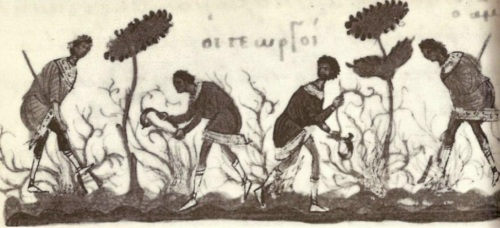 11th-century illustration of peasants at work in a Byzantine vineyard