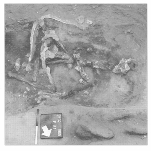 Sutton Hoo Burial 28, face in the dirt, posterior upwards, hands tied behind the back; image copyright Martin Carver & The British Museum, used by kind permission