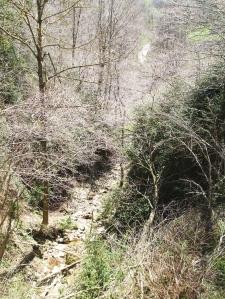 Riu d'Arçamala, in Vallfogona