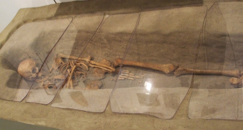 Skeleton in the Museu Arqueològic de Roda from the burial ground in front of Sant Pere de Roda, l'Esquerda