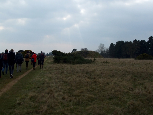 The edge of the burial ground at Sutton Hoo
