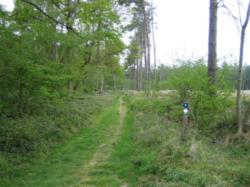 Great Ridge Wood, near Cricklade, part of the estate concerned in the Fonthill Letter