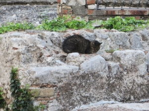 Cat on the ruins of San Pancrazio, Taormina