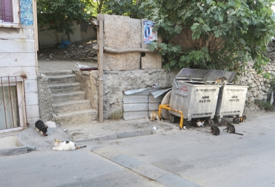 Cats crowded round fishmongers' refuse in Istanbul