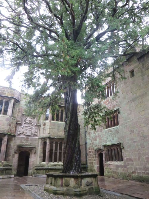 Conduit Court, with yew tree, at Skipton Castle