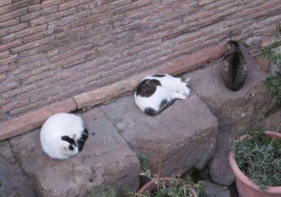 Cats in the Colonia Felina di Torre Argentina, Roma